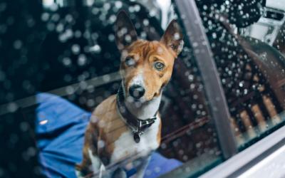 image for Pet Disaster Preparedness Day